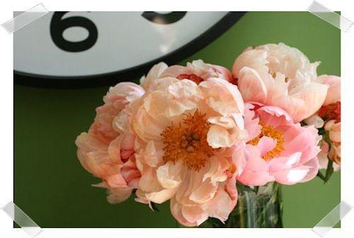 Hillroad: flowers