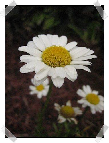 Artsy: Flowers