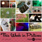 This Week in Pictures, Week 18, 2017