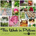 This Week in Pictures, Week 21, 2017